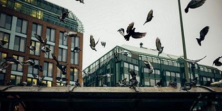 control de aves urbanas Tenerife